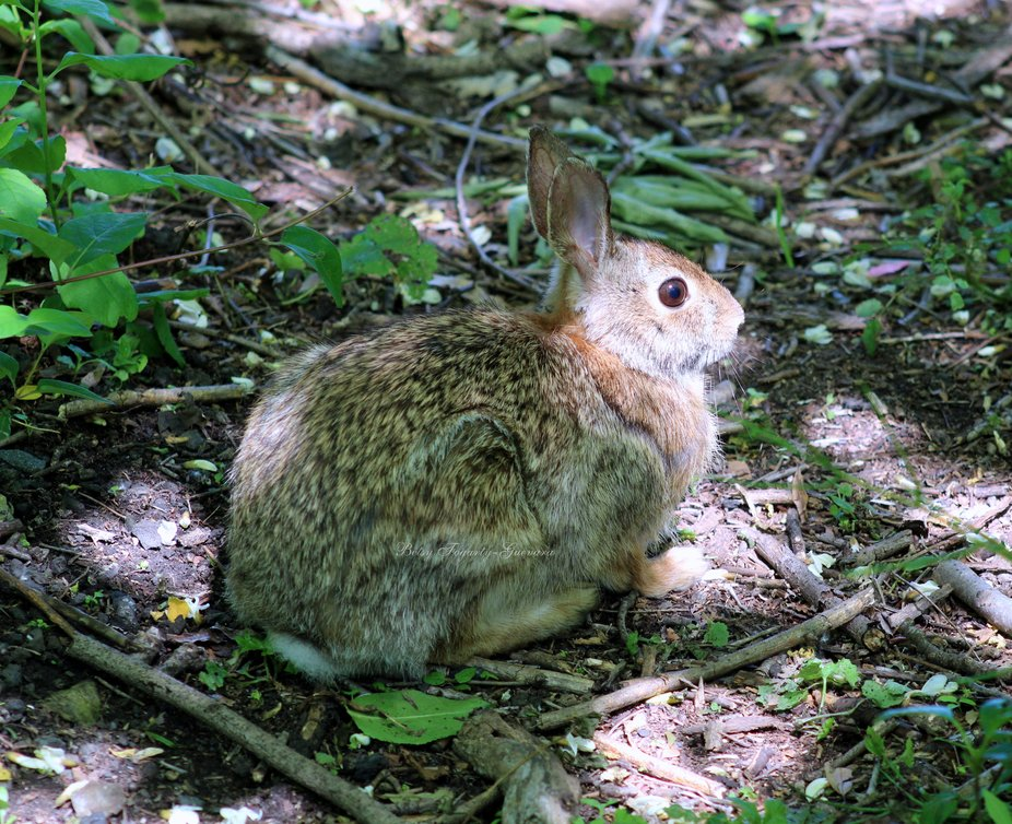 Rabbit=wm-1