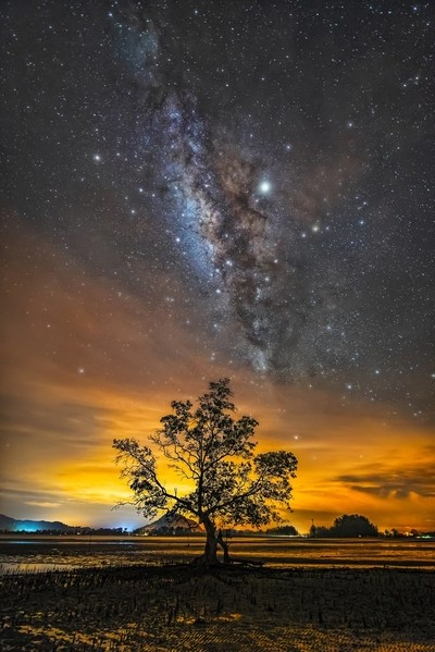 The Milky Way and the Lonely Tree