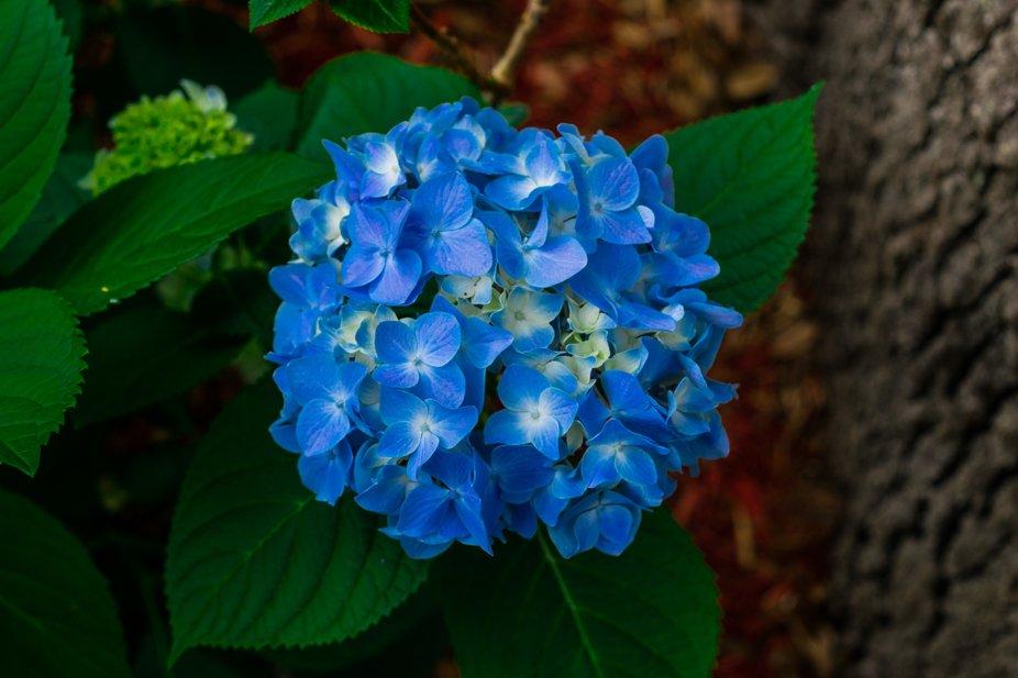 Beautiful Bloom in my yard