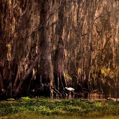 SJR Swamp