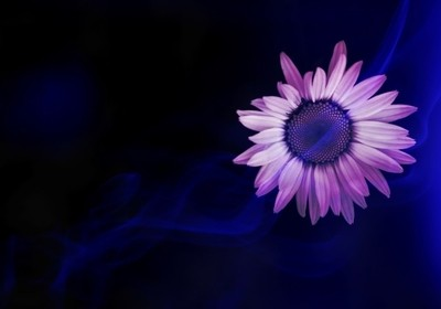 Rhapsody and purple and a
