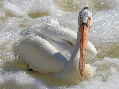 Pelican Bubble Bath