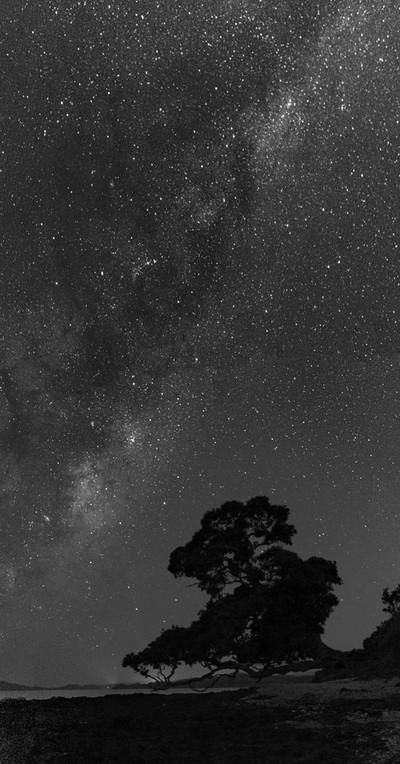 Lone Tree Under the Stars