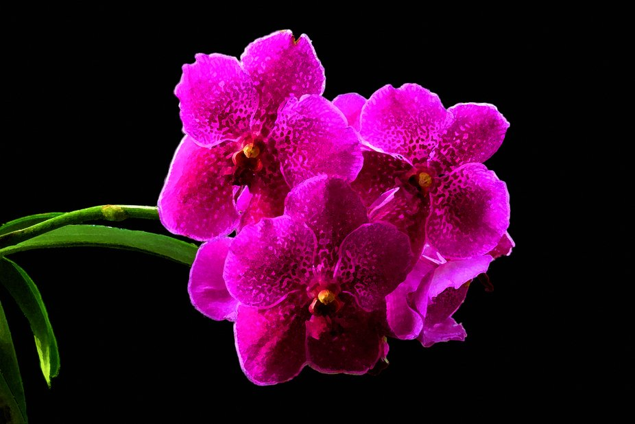 When I lived in Key West I had many orchids in my yard. This was a vanda which bloomed every year...