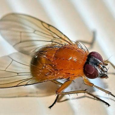 Fly (3)