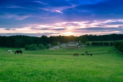Pa. Horsefarm