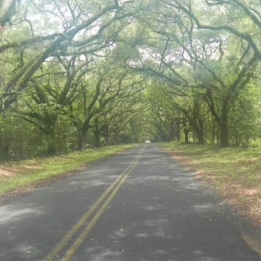 Trees in Hardeeville (2)
