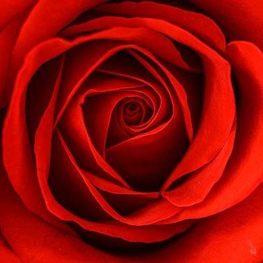 The red petals ..