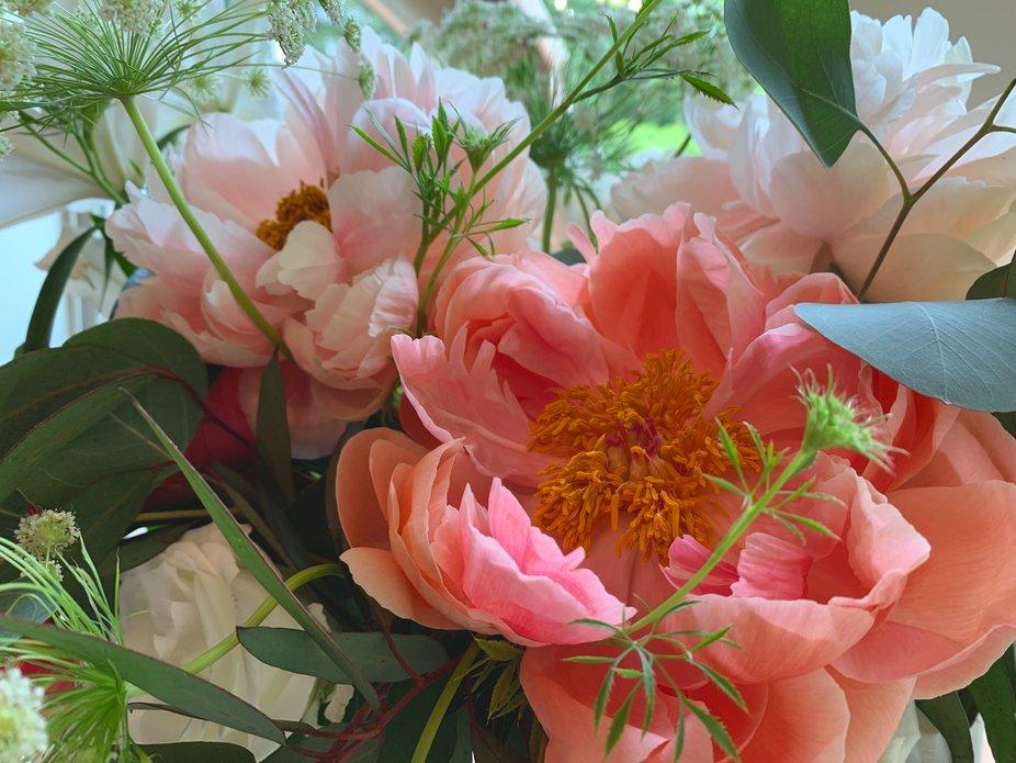 PEONIES!  My new favorite flower