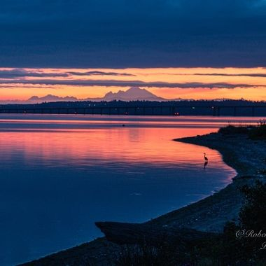 Hood Canal with Mt. Baker and Heron silhouette.
