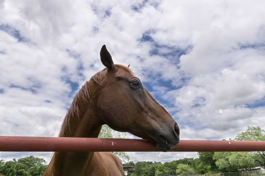 Profile of a beautiful brown horse looking off to the side with its head over a red orange metal ...