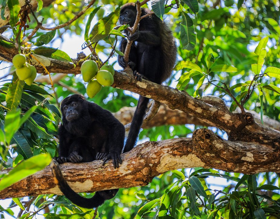 Loved seeing these monkeys as we traveled around Costa Rica