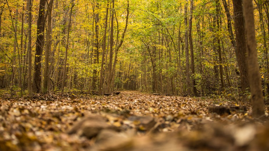 In the Fall time, I drive around in Fairfax county looking for photo opportunities. This was one ...