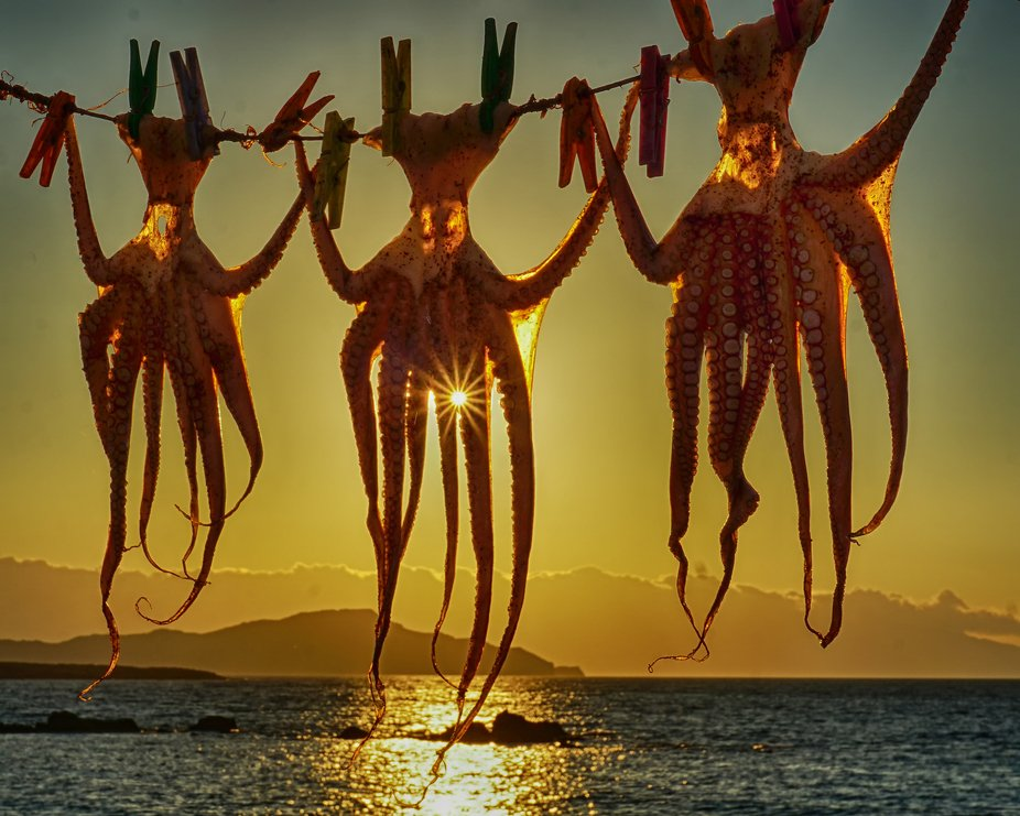 Octopuses hanging out to dry  in front of a local fish restaurant on the Greek island of Crete.