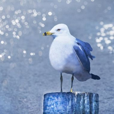 Seagull and Some Bokeh