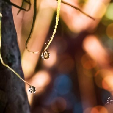 Bokeh and Droplets
