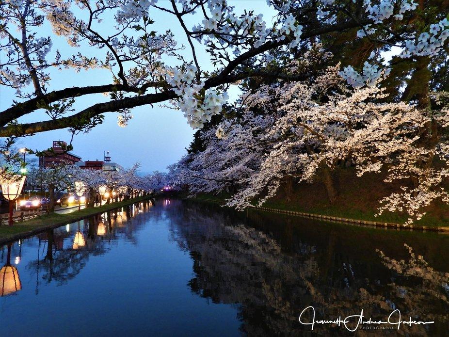 Hirosaki Cherry Blossom Festival 2018