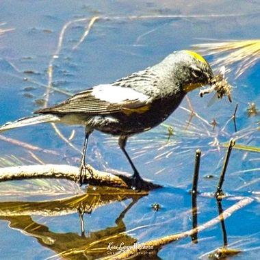 bug hunting bird