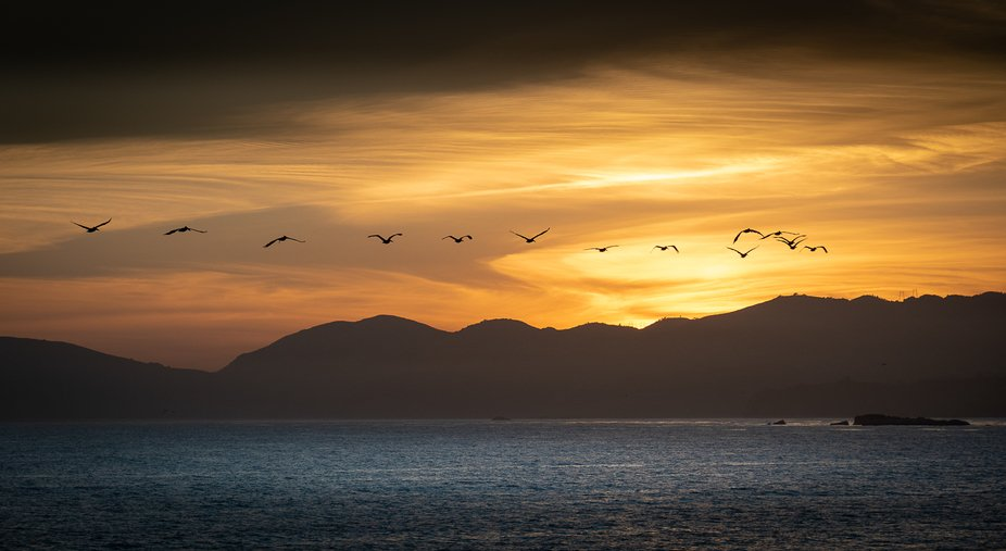 Pelicans flying into the Pismo Beach, California sunset.