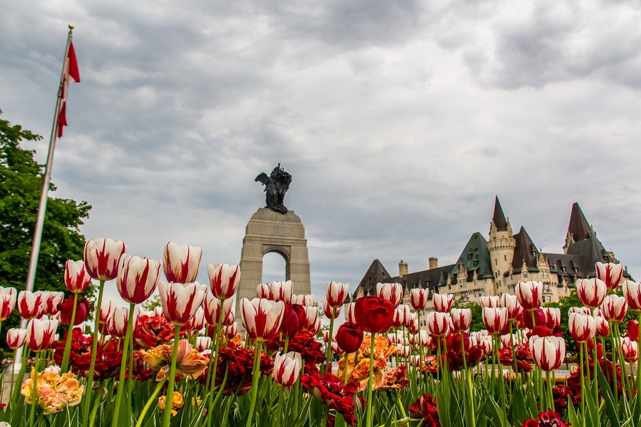 War Memorial and Chateau Laurier during tulip festival