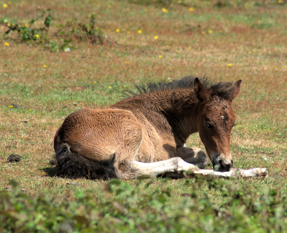 Chilled Foal