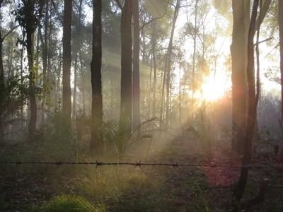 barbwire at sunrise
