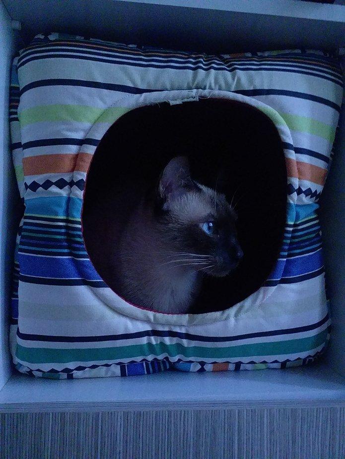My cat in Blue in her cat hause.
