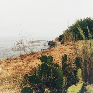 Coastal plant life!