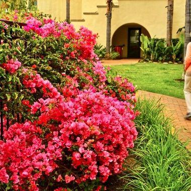 Color explosion at the TERRENEA Resort in Palos Verdes!
