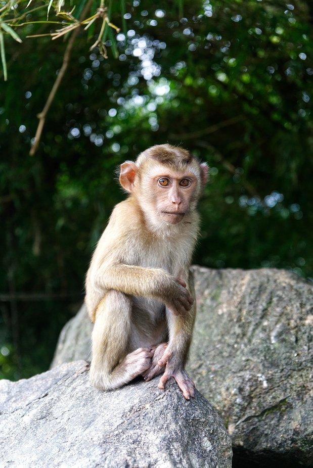 A monkey teenager