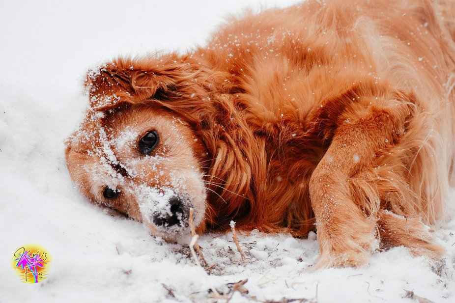 Snowy Days are Enjoyable...