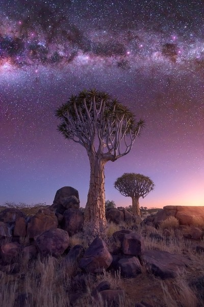 Quiver Forest under the Starry Sky