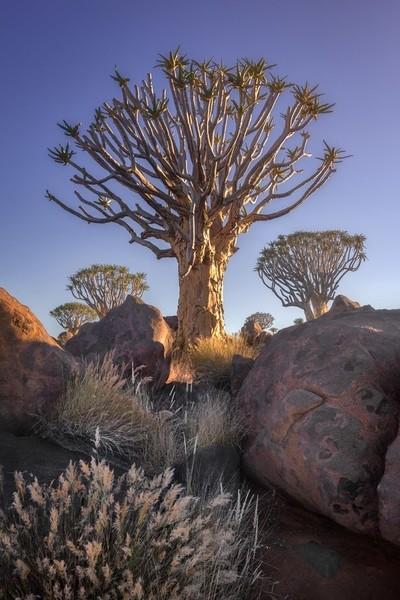 Quiver Forest in the Morning