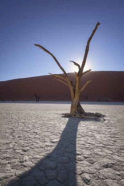 Dead Acacia Trees of Deadvlei