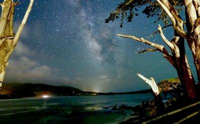 Stars amongst the Cypress Grove.