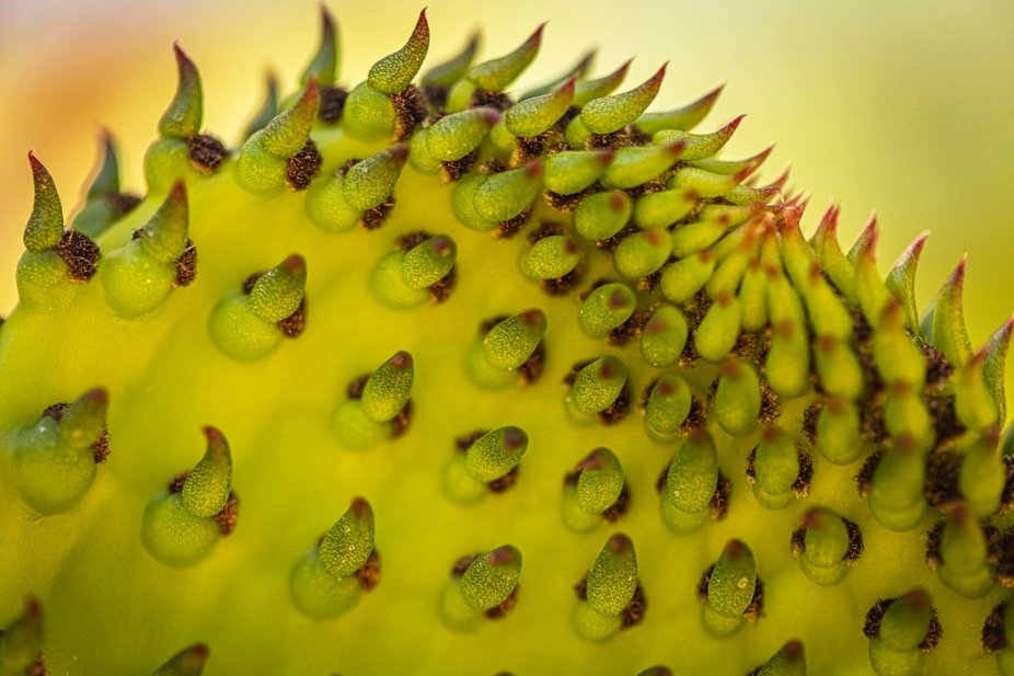Macro of a cactus in Arizona