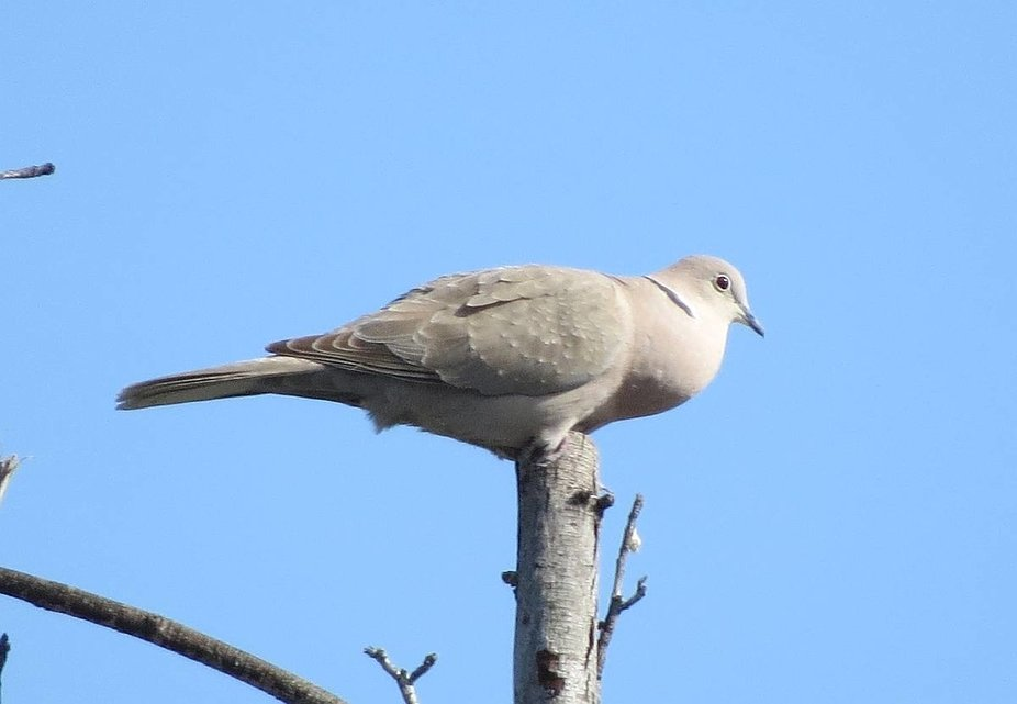Balanced on top of a tree