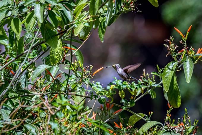 Scene With Hummingbird