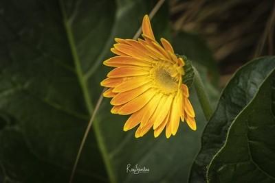 A Summer Bloom