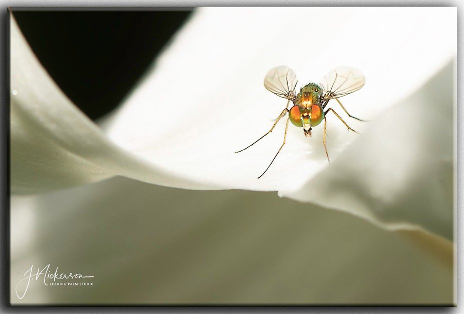 """""""Small Insect - Big Flower"""""""