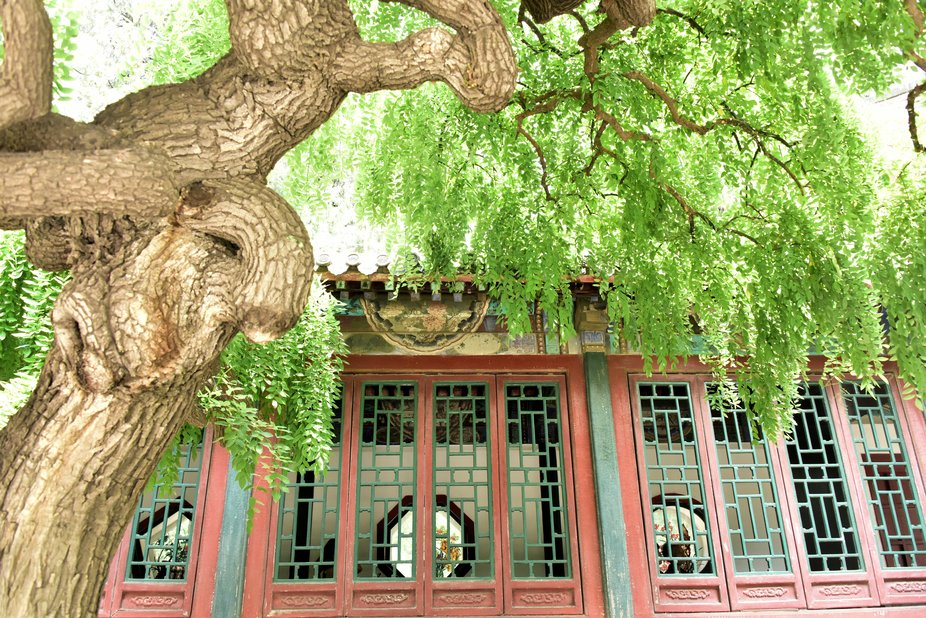 At the Summer palace in Beijing. June 2019