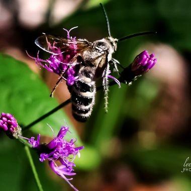 Bee in Your Bonnet