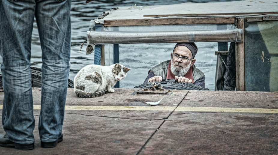 The stray cat was a little hesitant in taking the live lunch the fisherman threw to her!