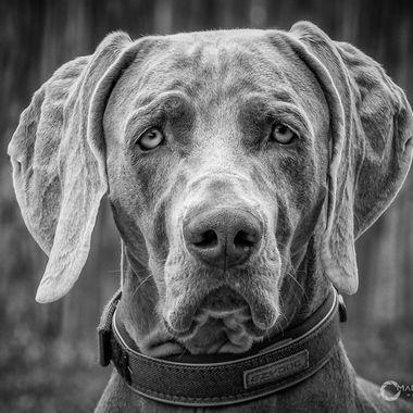 Black & White Dogs