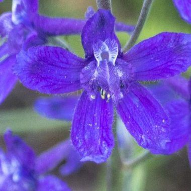 0P6A5956 Wildflower