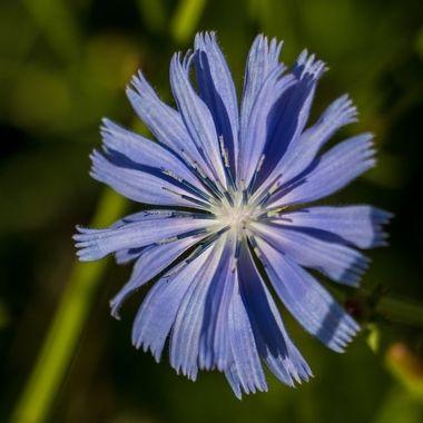 0P6A5976 Flower