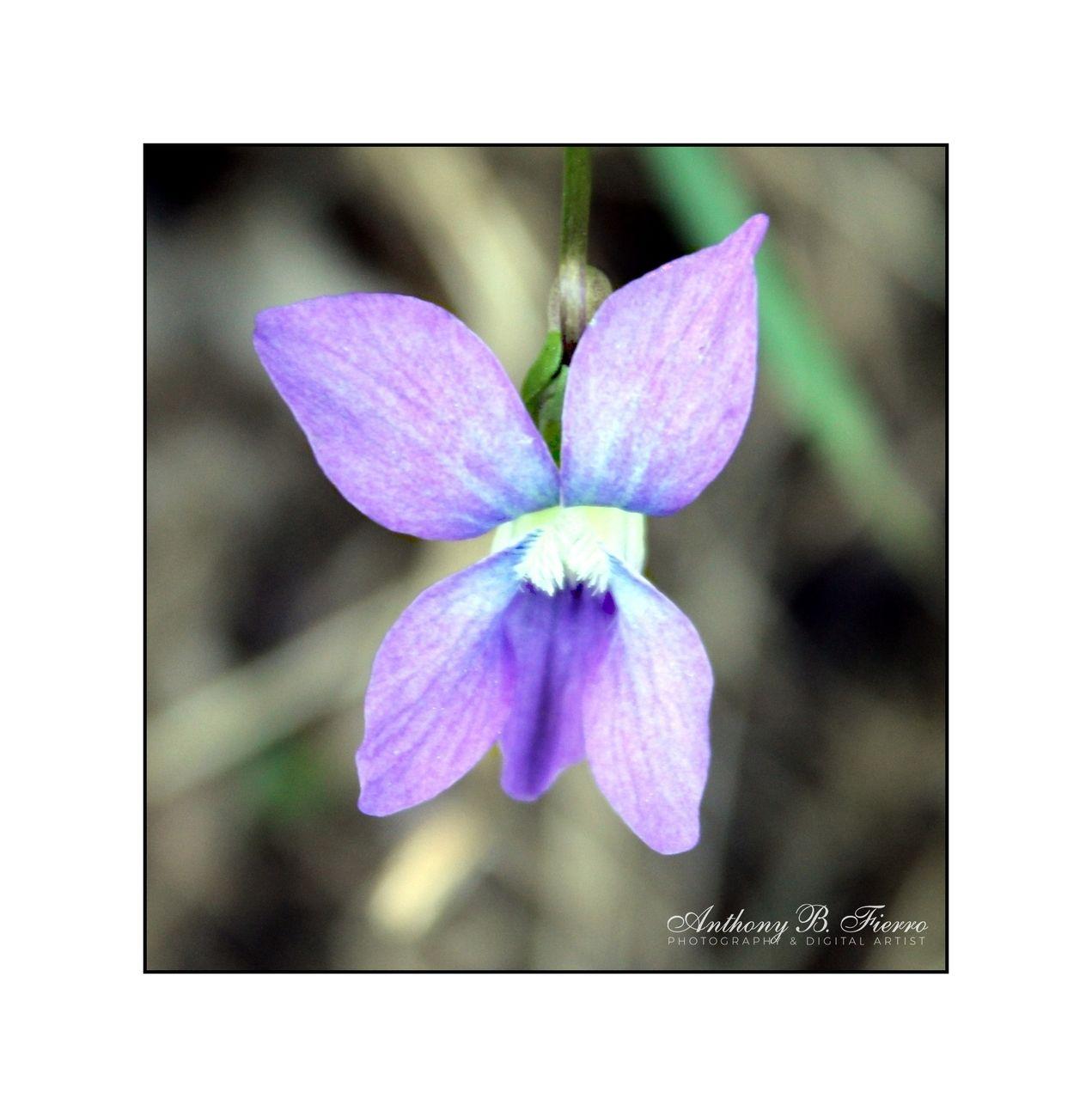 Flower 2727 4