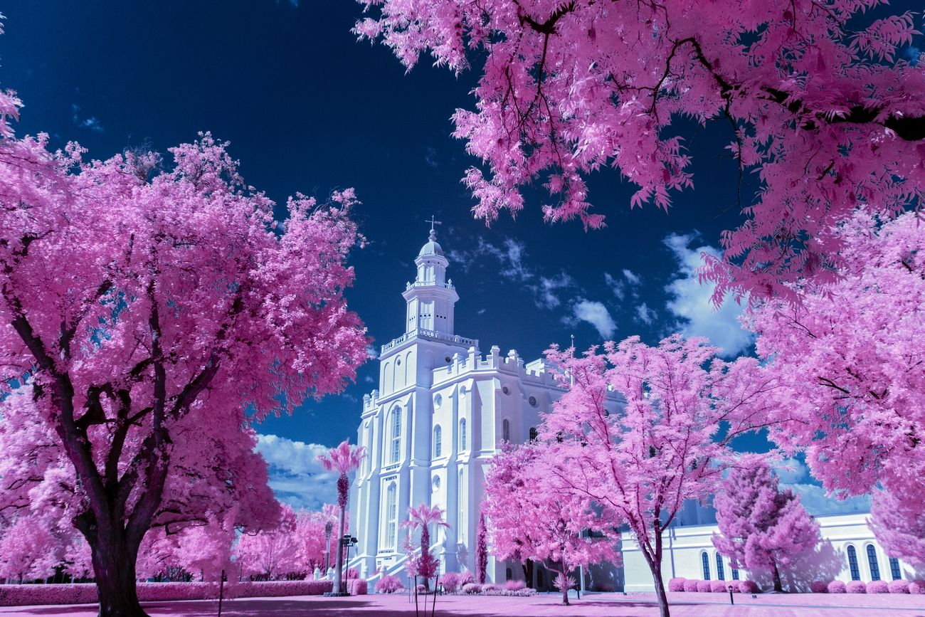 White Temple building sourounded by Pink grass and trees with blue sky. Saint George Utah Temple for The Church of Jesus Christ of Latter Day Saints.  Taken in 590 nm Infrared using a full spectrum converted camera.
