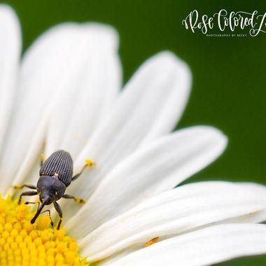 Pollen for dinner
