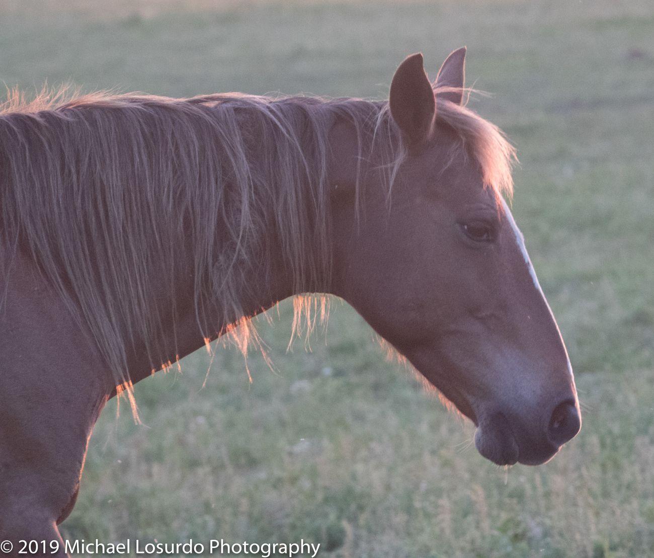 Mowdy Mustang Ranch Coalgate, OK